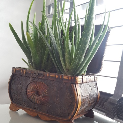 Repurpossed jelwerry box turned into a succulent planter